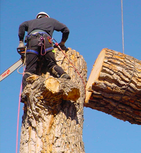 South West Tree Services